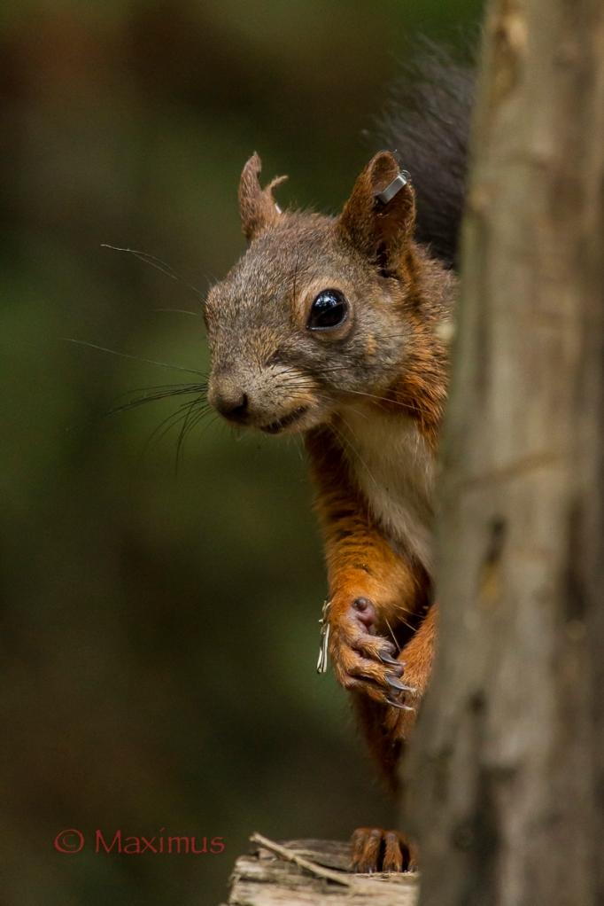scoiattolocucùjuzaok