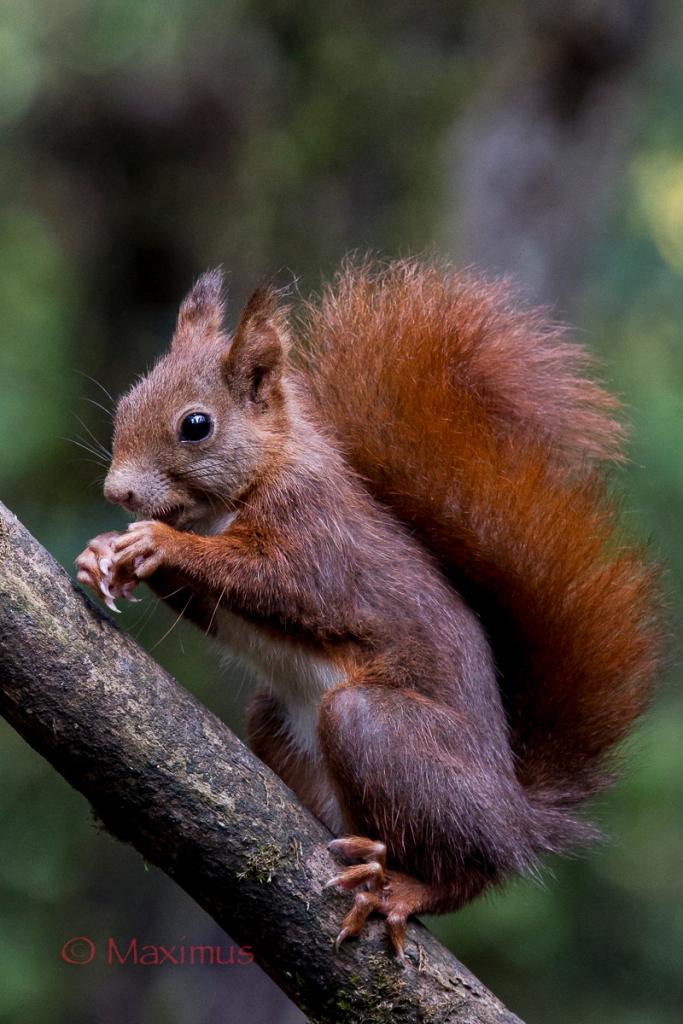scoiattologiovanediagonalejuzaok