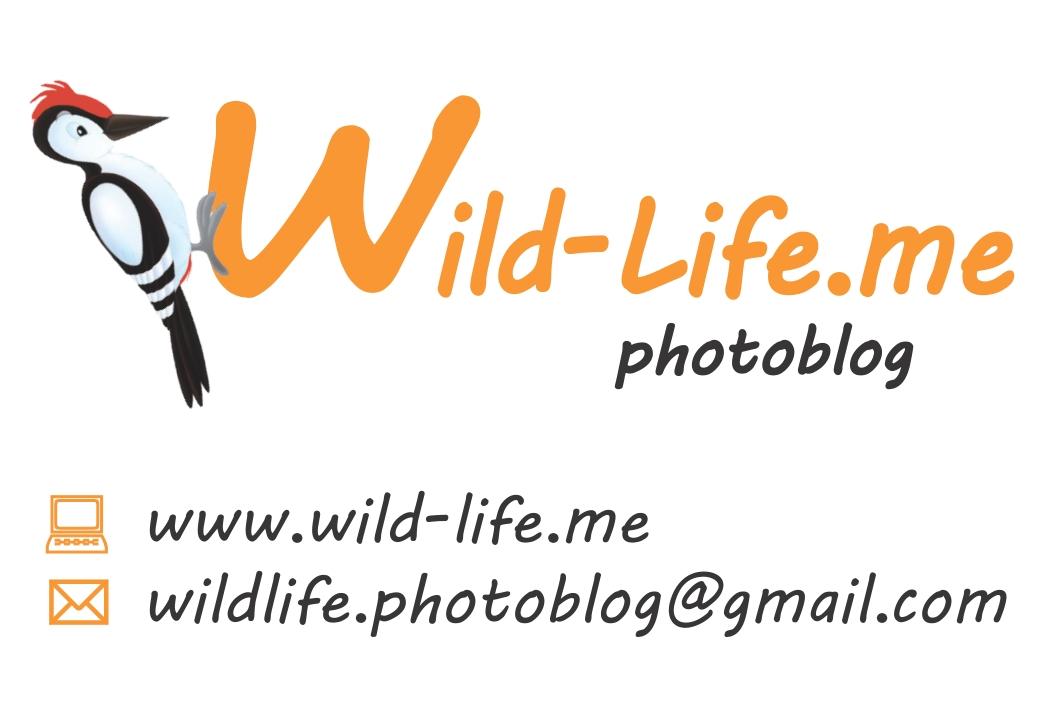 14 luglio 2013: Mostra Fotografica by Wild-Life.me!