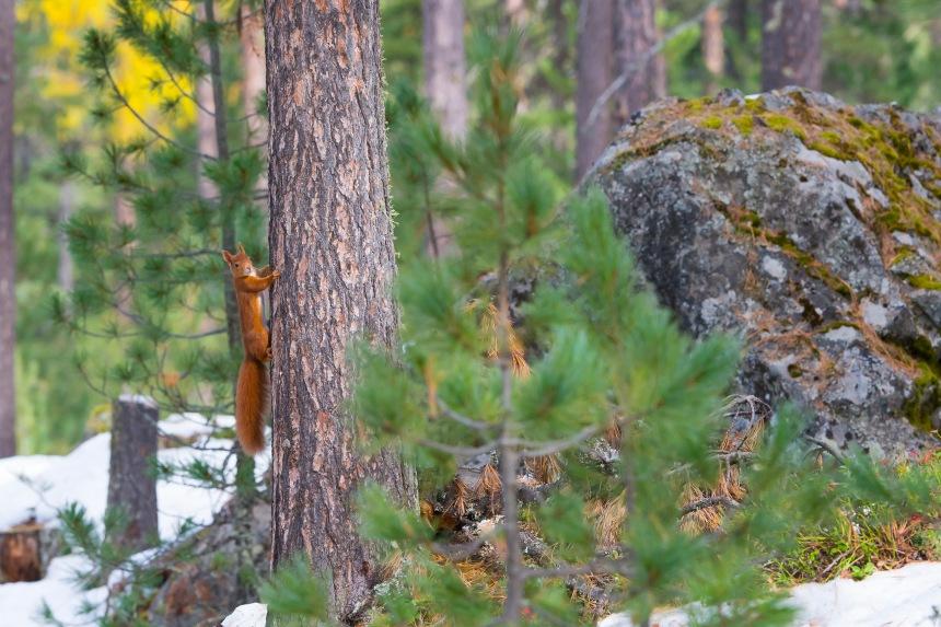 scoiattolo su pianta
