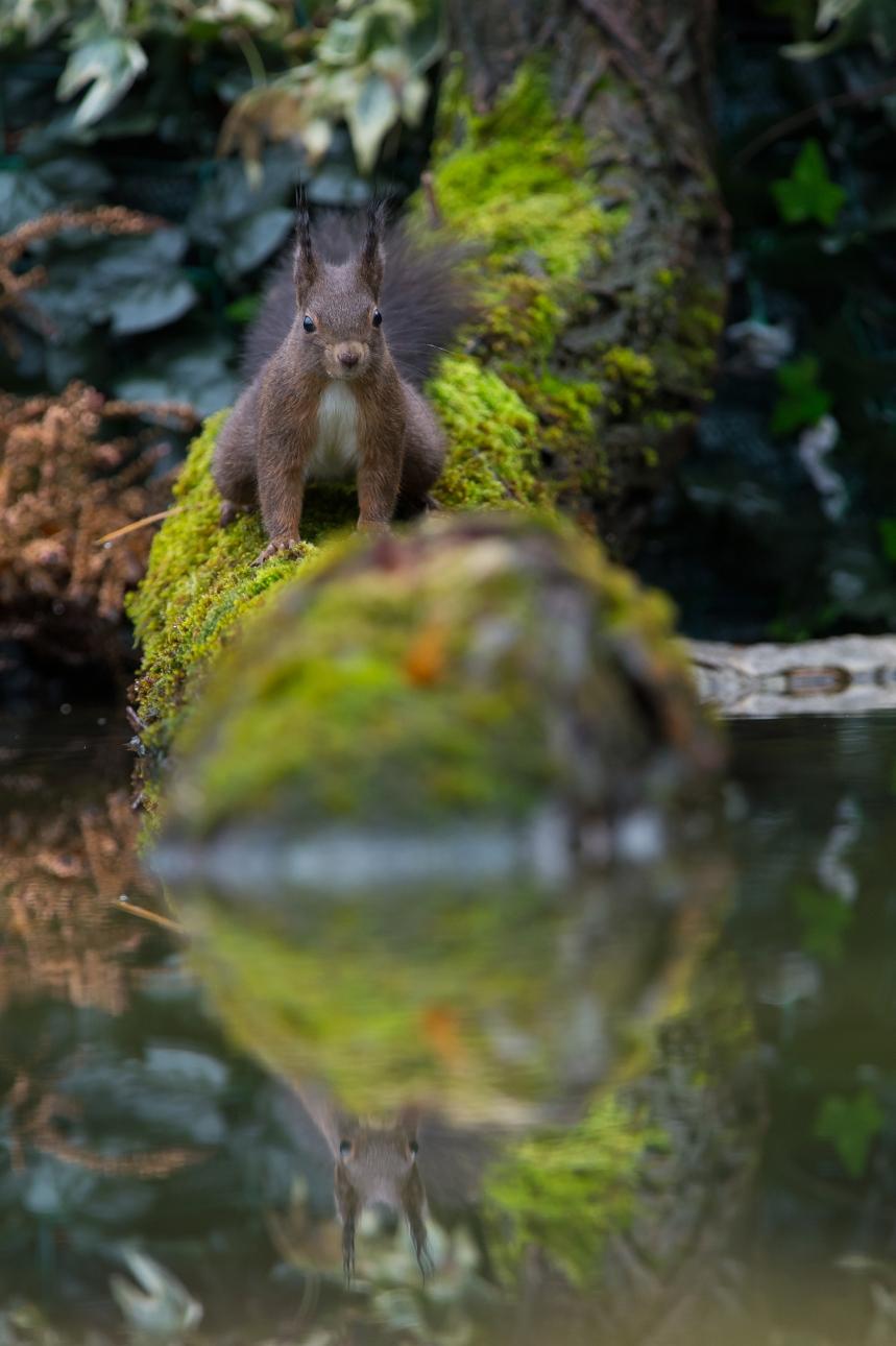 scoiattolo 11.bis