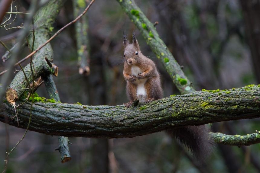 scoiattolo3