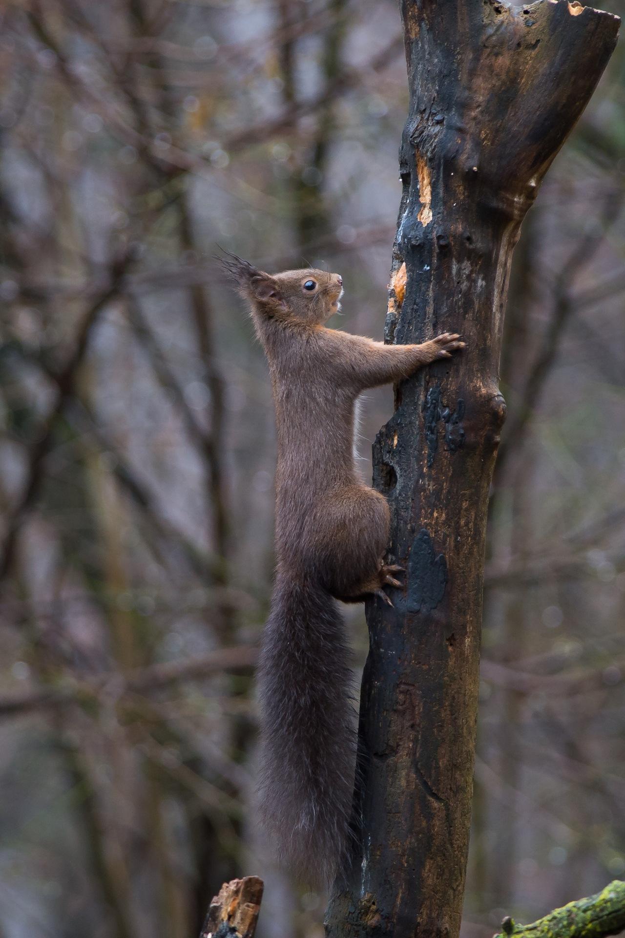 scoiattolo6