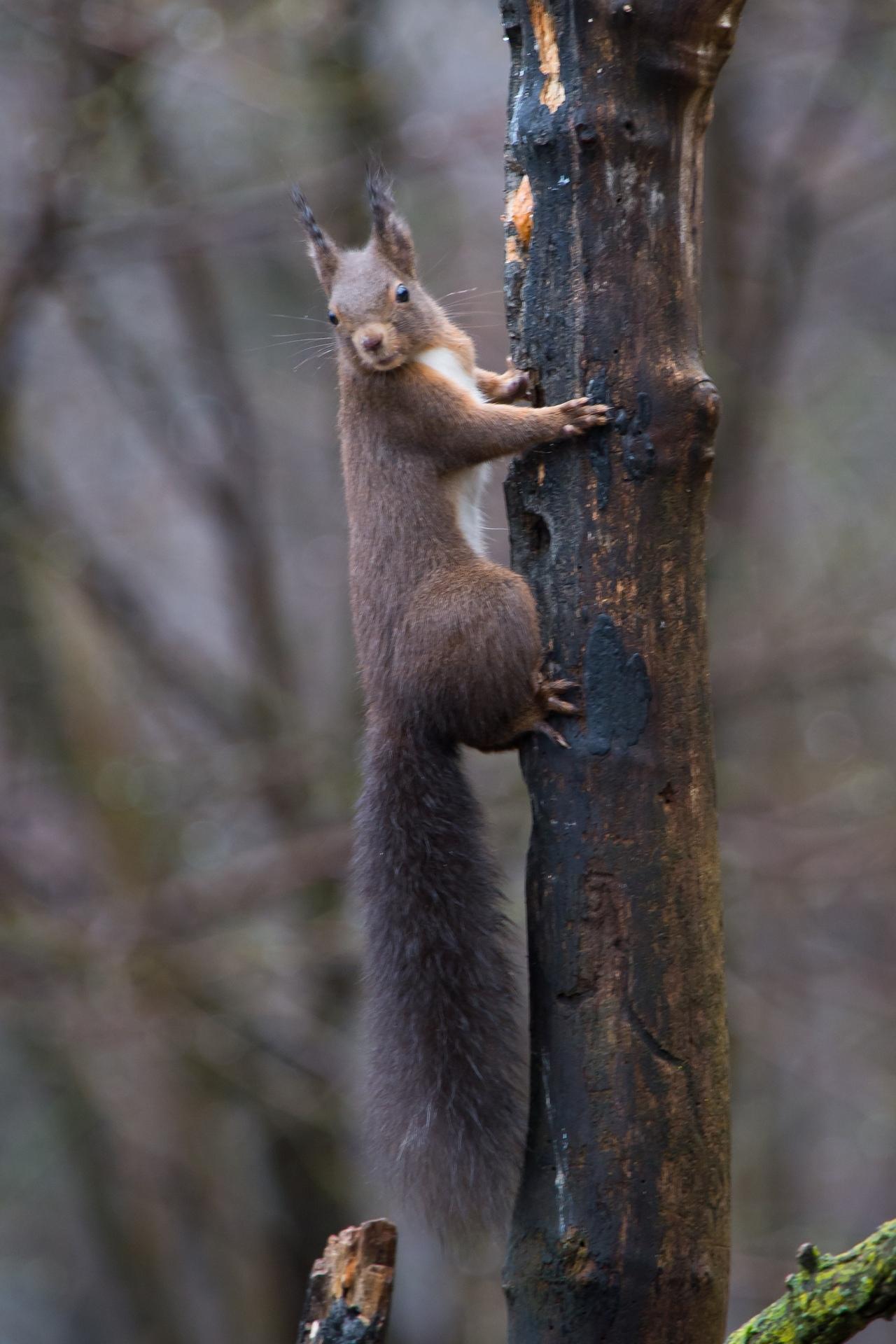 scoiattolo7
