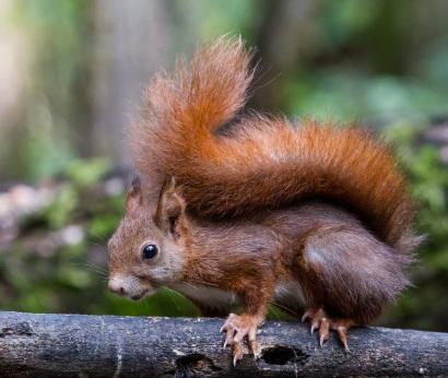 scoiattolocalendario