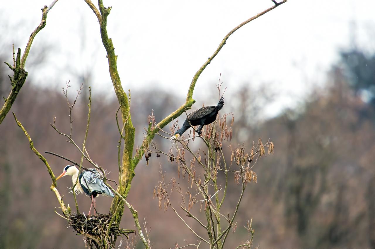 cormorano-e-airone
