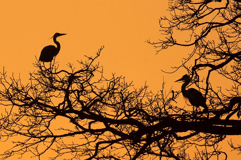 L'albero degli aironi # 4