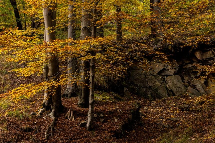 04_Il bosco01