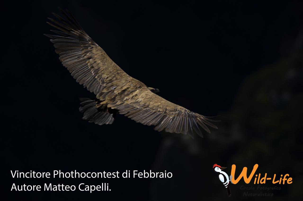 VINCITORE P.C. FEBBRAIO