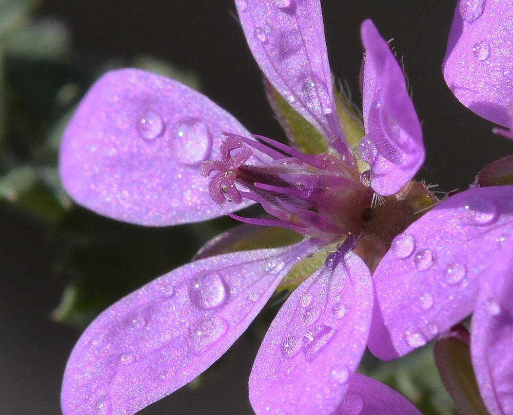 I più piccoli fiori dicampo